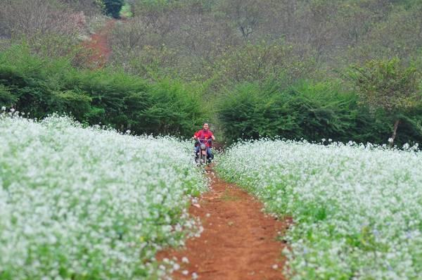Con đường hoa cải tuyệt đẹp. Ảnh: Phong Van