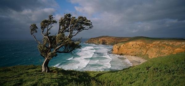 Quần đảo Chatham từ lâu đã nổi tiếng với khung cảnh thiên nhiên và hệ động thực vật độc đáo, điểm đến quen thuộc của các nhà quay phim, nhiếp ảnh gia và những người yêu thiên nhiên. Ảnh: Air Chathams.