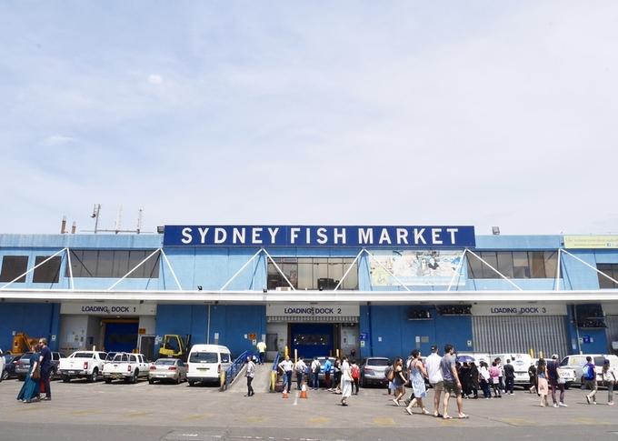 """Được mệnh danh """"thiên đường hải sản"""" ở thành phố cảng Sydney, chợ cá bên vịnh Blackwattle (Pyrmont), cách trung tâm thành phố tầm 2 km, là thị trường hải sản lớn thứ 3 trên thế giới, mỗi năm thu hút hàng triệu lượt du khách ghé thăm."""