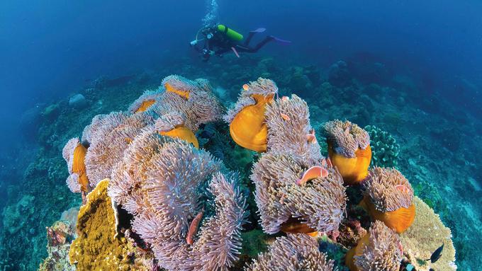Rạn san hô hẹp bao quanh đảo là nơi sinh sống của 88 loài san hô khác nhau và 600 loài cá. Lặn biển là điều phải làm với khách du lịch mỗi lần đến đảo vì sự phong phú của động thực vật dưới nước. Những cảnh tượng ngoạn mục chỉ cách bờ biển vài mét. Flying Fish Cove là địa điểm nổi tiếng và dễ tiếp cận hơn cả, phù hợp để lặn với ống thở và bình khí. Ảnh: Aussie Specialist. Hiện Australia được nhiều công ty lữ hành, trong đó có Tugo, đưa vào lịch trình khám phá. Công ty du lịch Tugo được thành lập từ năm 2015, chuyên tổ chức tour du lịch hướng đến các thị trường cao cấp như: Hàn Quốc, Nhật Bản, Đài Loan, Australia, Pháp, Mỹ, châu Âu.