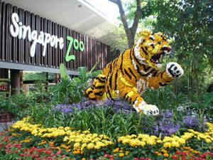 Vườn thú Singapore - VTQ Team