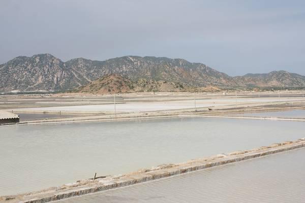 Cánh đồng muối ở Phan Rang. Ảnh: San San